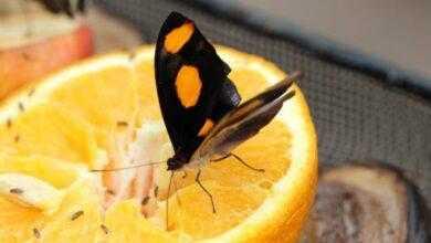Фото Почему съедобные насекомые полезнее, чем стакан апельсинового сока?