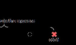 WAL в PostgreSQL: 3. Контрольная точка