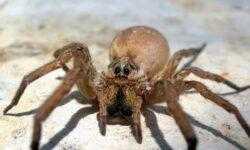 Глобальное потепление может разозлить пауков