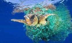 Найден способ удалить из мирового океана весь пластик