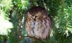 Почему некоторые птицы готовы пожертвовать своей жизнью во имя сна?