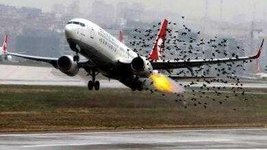Фото Почему птицы сталкиваются с самолетами?