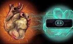 Сердце-на-чипе научили сокращаться. Что это такое и почему это важно?