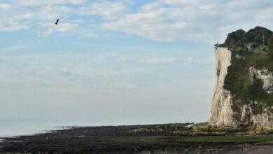 Фото Видео: француз Фрэнки Запата стал первым, кто пересёк Ла-Манш на реактивном «флайборде»