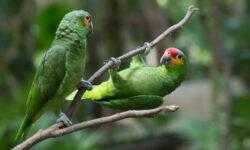 Железная хватка: кинематика приземления птиц в зависимости от геометрии и текстуры поверхности