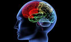 Что происходит в мозге, когда рождается мысль?