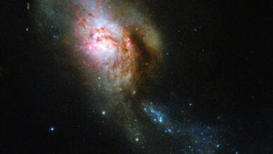 Фото Фото дня: великолепная Медуза на просторах Вселенной