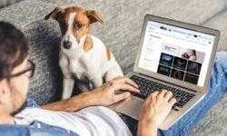 Лучший ноутбук для учёбы — игровой: Яндекс.Маркет изучил предпочтения российских потребителей