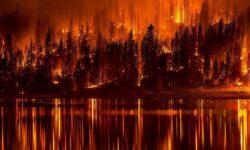 Может ли наша планета выжить без деревьев?