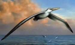 Найдены останки самой древней птицы в мире. О чем они могут рассказать?