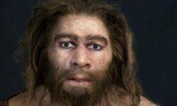 Неандертальцы могли исчезнуть от простудного заболевания
