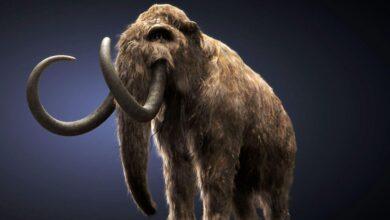 Фото Некоторых вымерших животных воскресят в ближайшее время