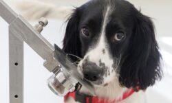 [Перевод] Эпопея по созданию робота с нюхом собаки