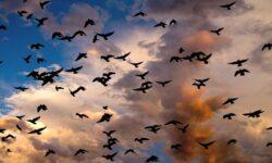Почему в Северной Америке и Канаде исчезают птицы?