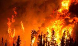 Разработана модель, способная предсказать лесные пожары за 20 минут до возгорания