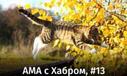АМА с Хабром, #13: важные новости для пользователей и компаний