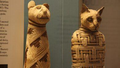 Фото Что находится внутри мумий древнеегипетских кошек?