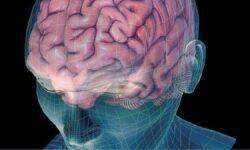 Как мозг создает и извлекает воспоминания?