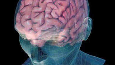 Фото Как мозг создает и извлекает воспоминания?