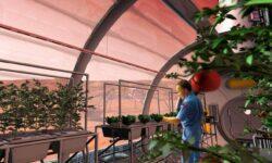 Можно ли выращивать растения в лунном и марсианском грунте?