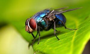 Назойливые асы: кинематика «инвертированного» приземления у синих мух