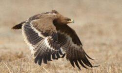 Влетела в копеечку: улетевшая в Иран птица разорила сибирских орнитологов