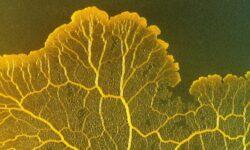 Загадочное существо без мозга может помочь ученым изучить механизм регенерации тканей
