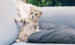 Чем опасны пуховые подушки?
