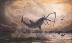 Найдены останки неизвестного ранее вида акул