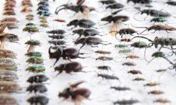 Насекомые и пауки стремительно исчезают с лица Земли. Чем это грозит?