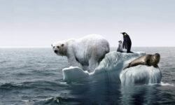 Нефтяные компании знали о риске глобального потепления гораздо раньше нас