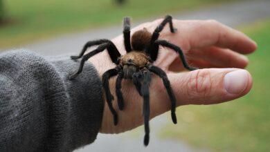 Фото Откуда взялась арахнофобия — страх перед пауками?
