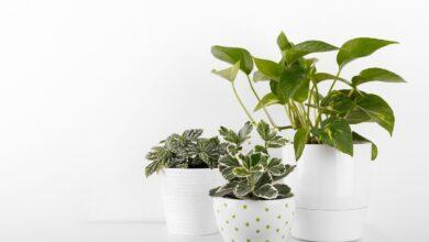 Фото Растения в доме не очищают воздух