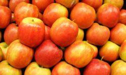 Сколько бактерий содержится в одном яблоке?