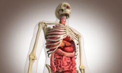Сколько стоят органы человека?