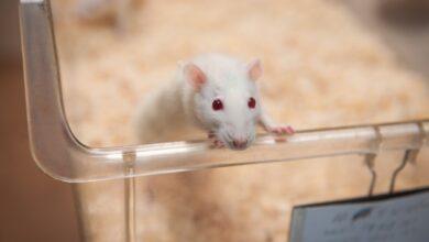 Фото Учеными обнаружен новый фактор эффективной доставки лекарств в опухоли