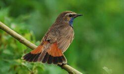 Изменение климата заставляет птиц эволюционировать