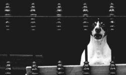 Какой болезнью могут заразить человека собаки из зоомагазинов?