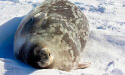 Ping из Антарктиды. Пост настоящего админа: с котиками и пингвинами