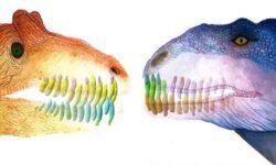 Почему у динозавров выпадали зубы?