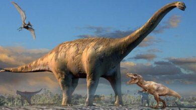 Фото Четвероногие динозавры могли ходить на двух ногах, но только в определенных условиях