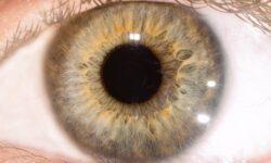 Можно ли определить остроту слуха просто смотря человеку в глаза?