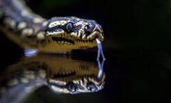 Можно ли создать змеиный яд в лаборатории и зачем он нужен?