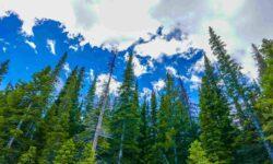 Почему леса так важны для нашей планеты?