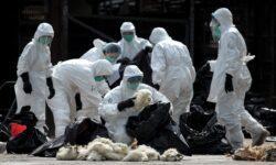 Стоит ли волноваться из-за нового вируса, обнаруженного в Китае?