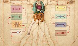 Учёные создали тело на чипе, имитирующее поведение 10 связанных органов