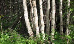 Увидеть лес за деревьями