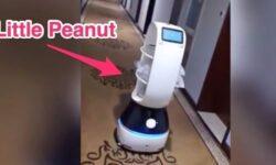 Видео: робот Little Peanut доставляет еду людям, находящимся на карантине из-за коронавируса