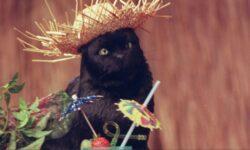 Жуткий эксперимент показал, каким образом кошки съедают человеческие трупы