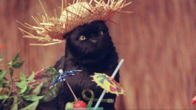 Фото Жуткий эксперимент показал, каким образом кошки съедают человеческие трупы